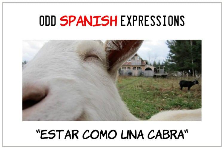 SPANSIH EXPRESSIONS Estar Como una Cabra