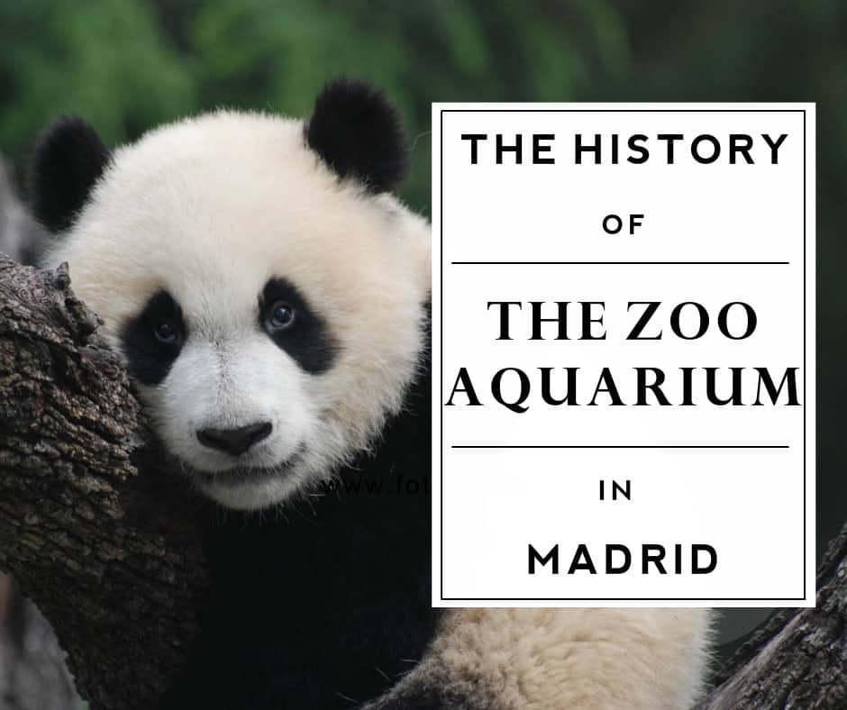 The History of the Madrid Zoo Aquarium - Citylife Madrid