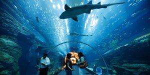atlantis-aquarium-discount-citylife-madrid