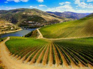 ribera-del-duero-wine-guide
