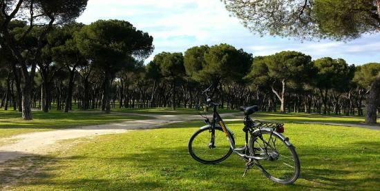 trixi-madrid-bike-tours